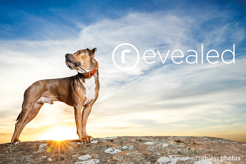 the reveal | strong leather dog collars