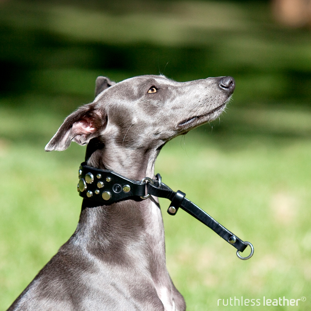 ruthless leather sighthound asteroid belt