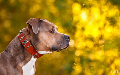 leather martingale collar with buckle